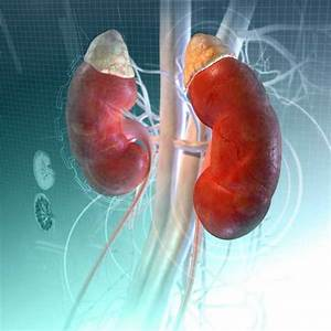Dialysis - Kidney And Urinary Tract Disorders