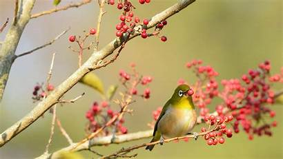 Birds Trees Wallpapers Wallpaperboat Kb
