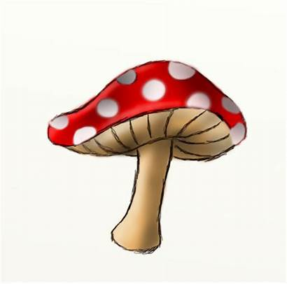 Drawing Mushroom Draw Toadstool Drawings Step Mushrooms