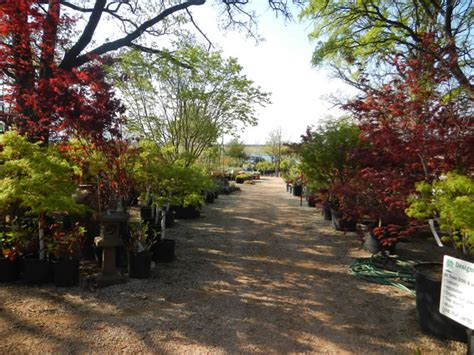 Japanese Garden Fort Worth Tx by New Property