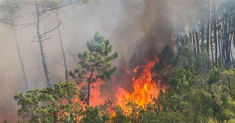 nova scotia places ban  woods due  wildfire