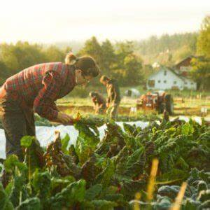 Is, Organic, Farming, Better, For, The, Environment