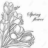 Corner Flower Crocus Drawing Outline Flowers Coloring Floral Spring Getdrawings Bouquet Vector Saffron Crocuses sketch template