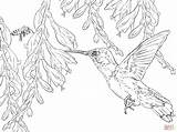 Hummingbird Coloring Bee Pages Hummingbirds Printable Flower Drawing Adult Supercoloring Colouring Sheets Animals Bird Birds Colors Dot Books Getdrawings Main sketch template