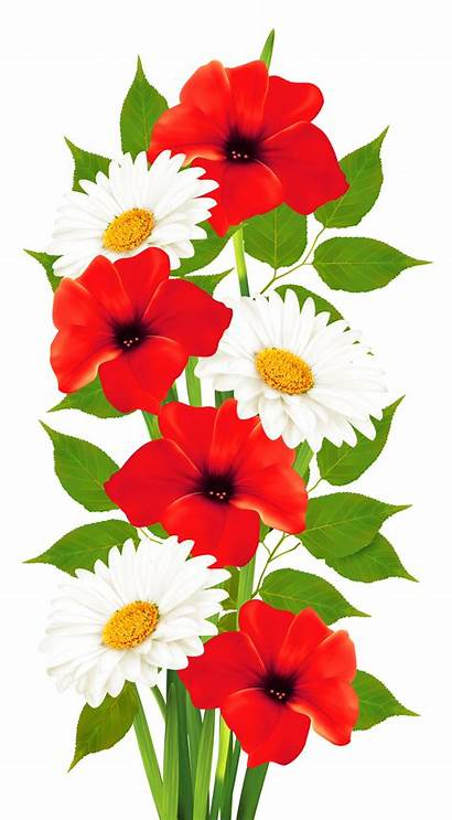 Transparent Clipart Daisies Poppies Flowers Flower Summer