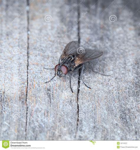 mouche grise de maison photographie stock libre de droits image 10719727