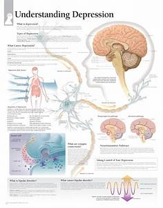 Understanding Depression  U2013 Scientific Publishing