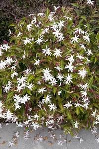 Arbuste Plein Soleil Longue Floraison : p pini re traditionnelle alternative la r union 974 ~ Premium-room.com Idées de Décoration