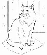 Cat Coloring Pages Printable sketch template