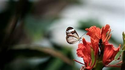 Butterfly Flower Child 5k Wallpapers Flowers Desktop