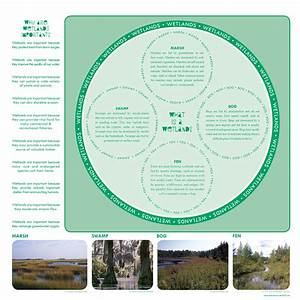 A Quick Lesson In Wetland Ecology