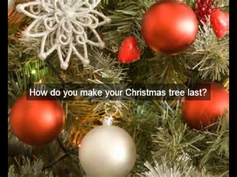 buy real christmas trees for sale nz christmas