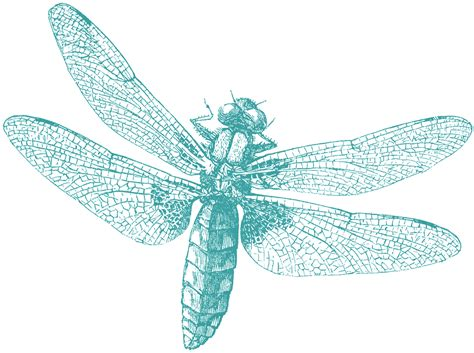 royalty free clipart royalty free images dragonfly the graphics