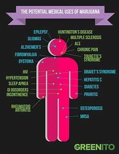 how medical marijuana works in the body