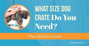 what size dog crate do you need the ultimate guide With what size dog kennel do i need
