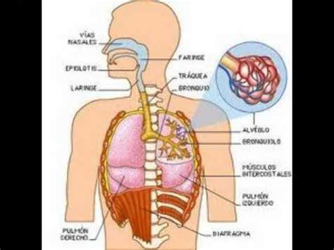 triptico sobre la respiracion triptico sobre la respiracion educaci 243 n f 237 sica 191 que es el metabolismo mp4 youtube
