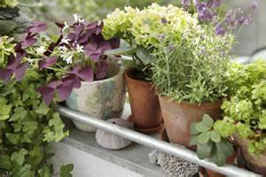 Gemüse Pflanzen Was Passt Zusammen : welche kr uter passen gut zusammen nebeneinander pflanzen ~ Lizthompson.info Haus und Dekorationen