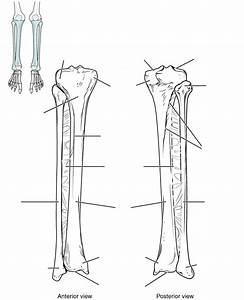 Markings Of Tibia And Fibula Quiz