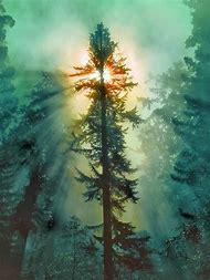 California Redwood Tree National Park