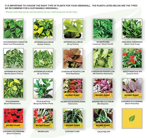 different types of plants types of garden bushes 28 images hosta that bloomin garden the sage is buzzin not