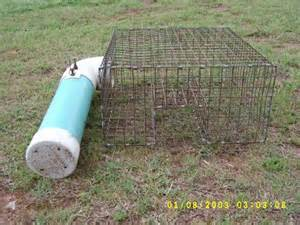 Homemade Squirrel Trap Plans