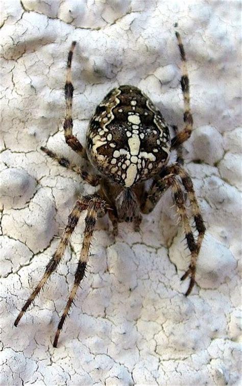 altweibersommer naturwunder und spinnen
