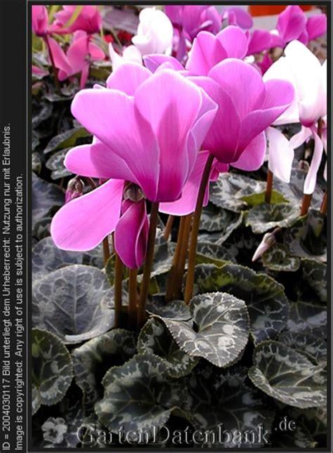 zimmerpflanzen f 252 r schatten nordfenster