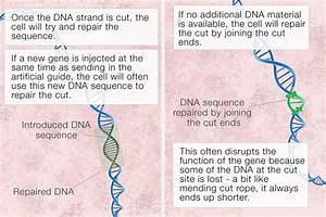 What Is Crispr Gene Editing  And How Does It Work