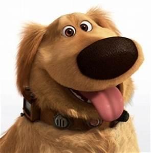 Up dog   Imagens   Donkr