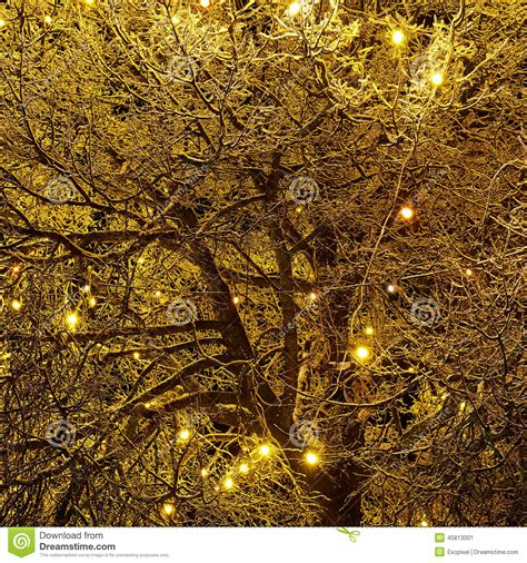 outdoor tree decorated with lights stock photo image