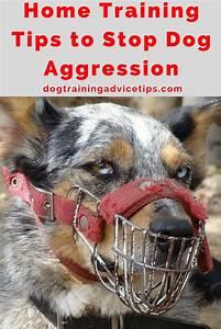 best 25 dog aggression training ideas on pinterest dog With aggressive dog training tips