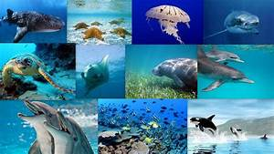 Marine Biome: Animals | Marine Biom