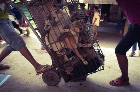 thousands  dogs   tortured  death   sold
