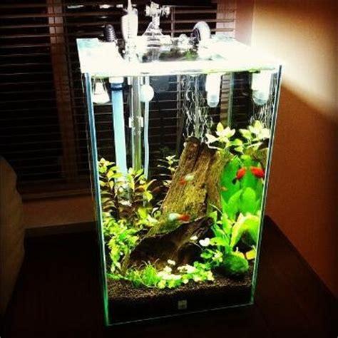 Fluval Chi Setup Source Fluval Facebook Page  Fish Tank