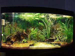 Aquarium Einrichten Beispiele : ber 200l 260 liter aquarium neueinrichtung besatz aquarium forum ~ Frokenaadalensverden.com Haus und Dekorationen