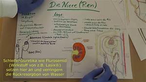 Niere  U0026 Nephron Wiederholung  Anatomie  U0026 Physiologie