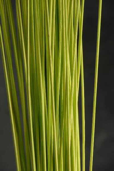 midollino sticks  lime green   pieces