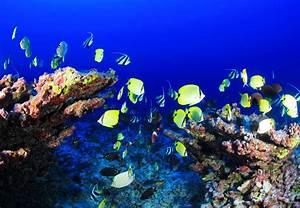 Free Images : sea, nature, ocean, blue, aquatic, colorful ...