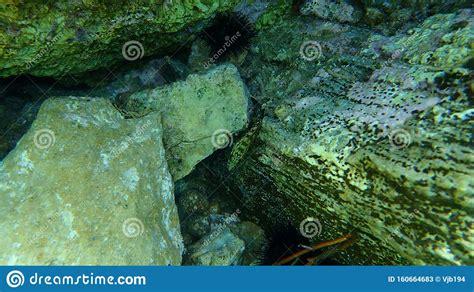 grouper marginatus epinephelus cernia dusky yellowbelly oscura giallastra pesce della