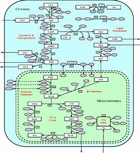 Schematic Diagram Of Biochemical Pathways Depicting Var