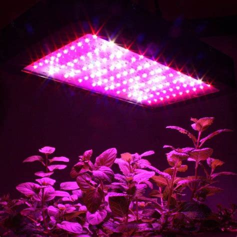 Artificial Light For Plants by Do Your Indoor Plants Need Artificial Grow Lights Home