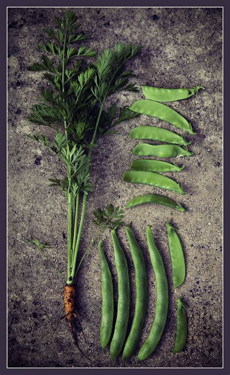 cuisiner les haricots mange tout le haricot mange tout quels fruits et légumes de saison