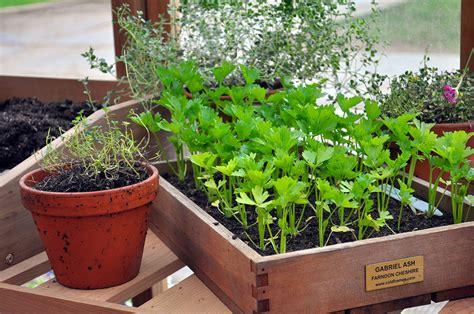 semer persil en pot semer du persil et du panais d 233 tente jardin
