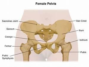 Labelled Diagram Of The Female Pelvis