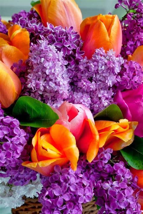 flower colors love this pop of color beautiful flower colors combos orange flower new book colors