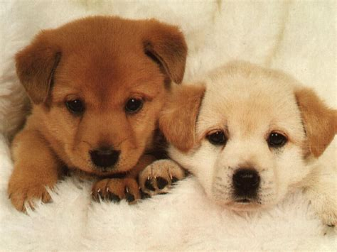 puppy pictures the dog in world photo of puppy dogs very pretty