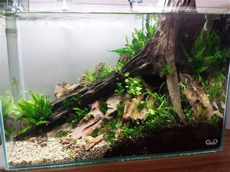 diy aquascape click this image to show the size version