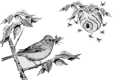 bird watchers general store