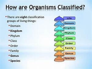 Classification & The Animal Kingdom - ppt video online ...