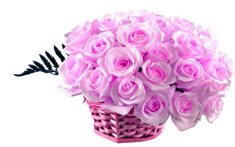 violet rose wallpaper  images